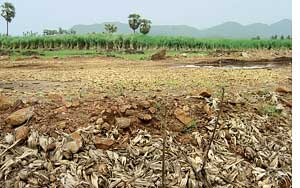 Rama Rao's field won't grow food anymore - R Uma Maheshwari