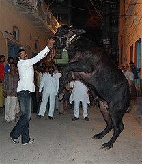 8 Buffalo Salaam! Salutes & Feats