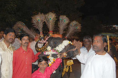 Young & Old parade their decorated buffalo